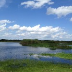 Water Marsh Image